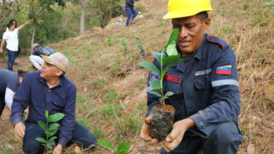 Photo of Reforestan el parque nacional Warairarepano